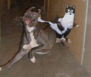 kucing_lucu_taekwondo