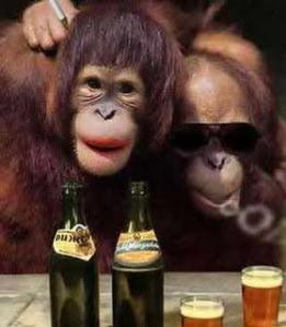 kisah para monyet lucu
